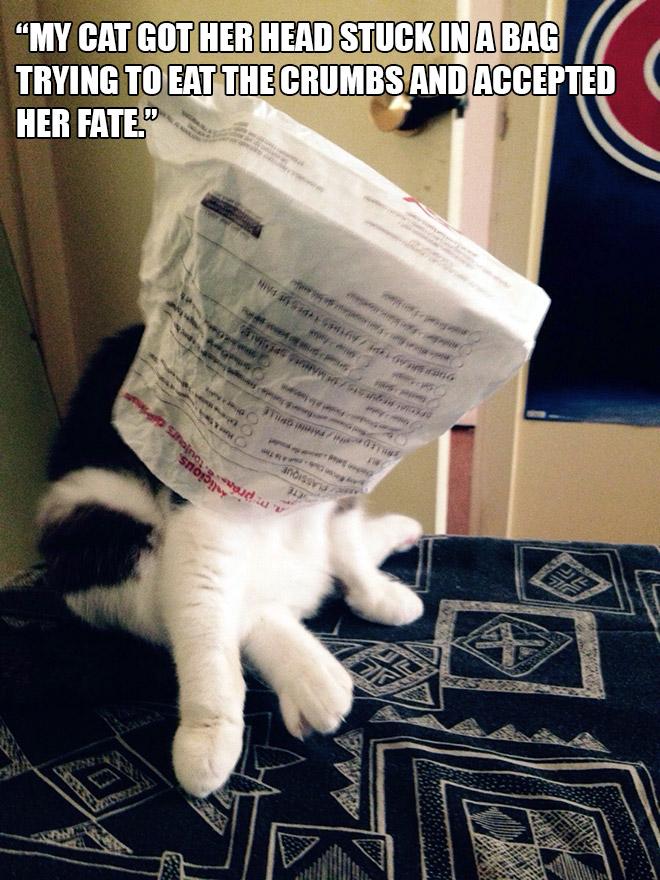Коты и пакеты 14