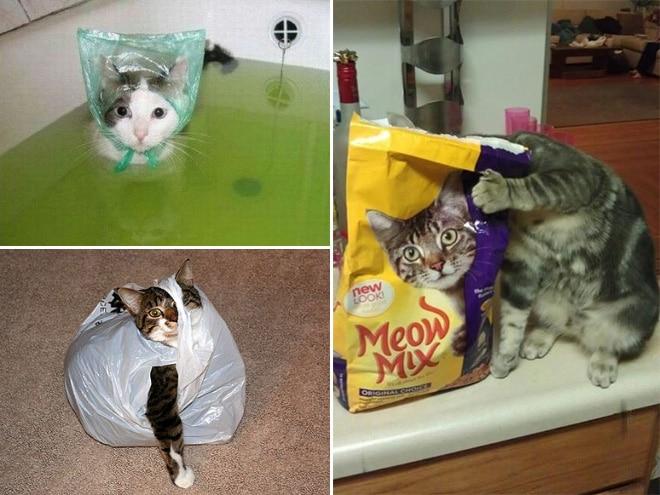 Коты и пакеты 11