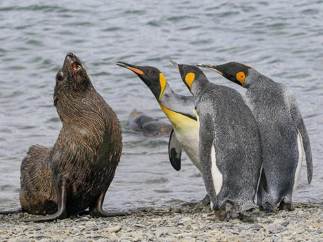 морской лев и пингвины