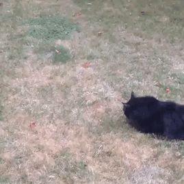 Fatal Error! 19 котов, которые забыли, как ими быть! 5