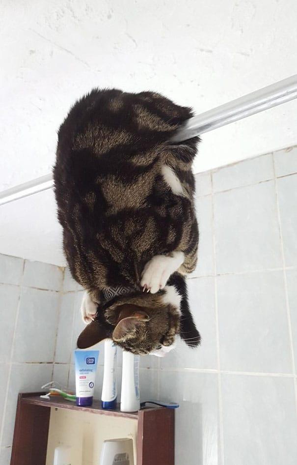 Fatal Error! 19 котов, которые забыли, как ими быть! 11