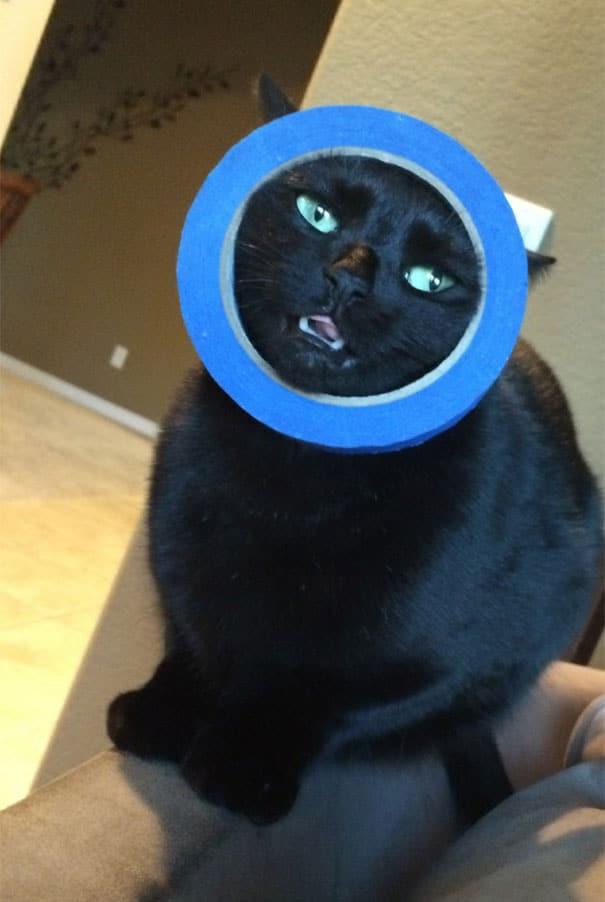 Смешные коты 1