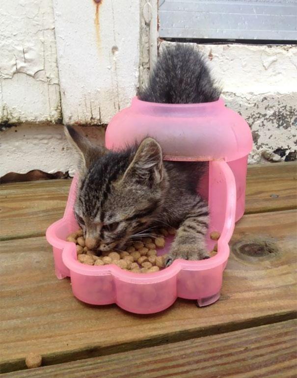 Fatal Error! 19 котов, которые забыли, как ими быть! 2