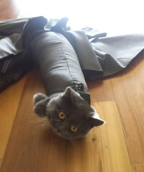 Fatal Error! 19 котов, которые забыли, как ими быть! 1