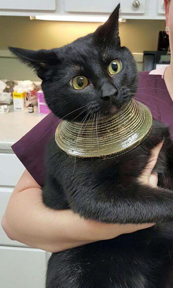 Fatal Error! 19 котов, которые забыли, как ими быть! 8