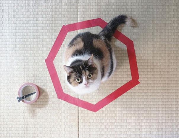Смешные коты 5