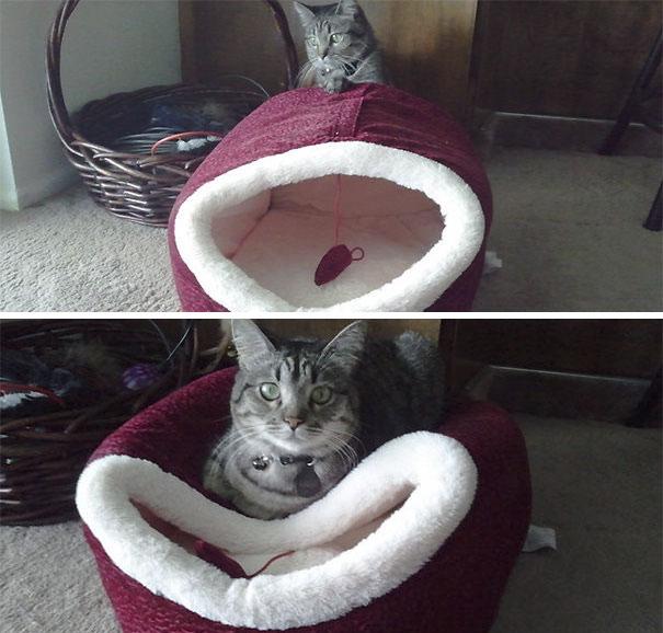 Смешные коты 3