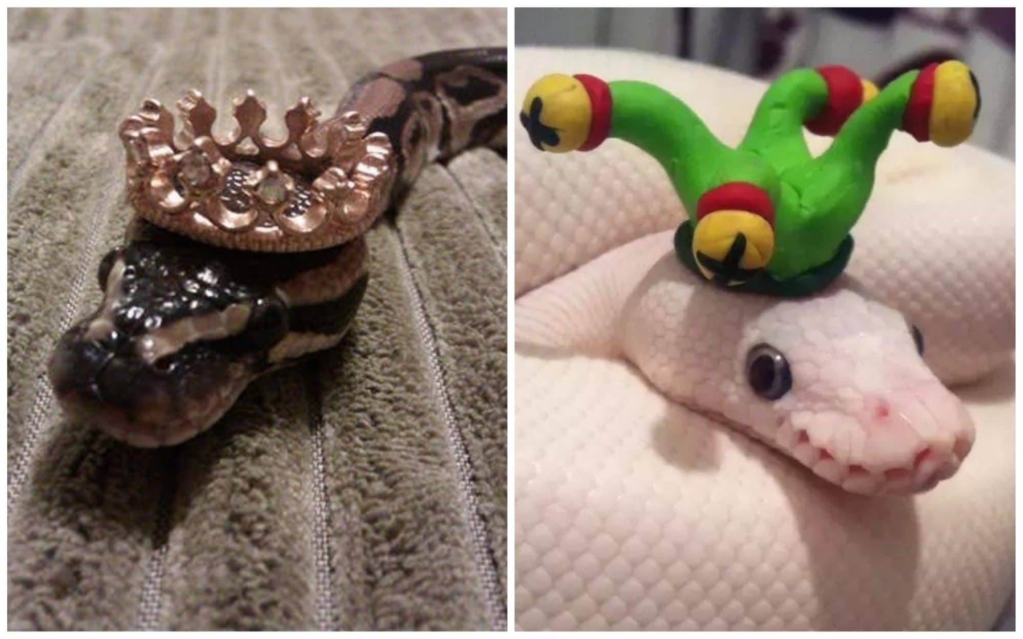 20 милых снимков змей в головных уборах! 20