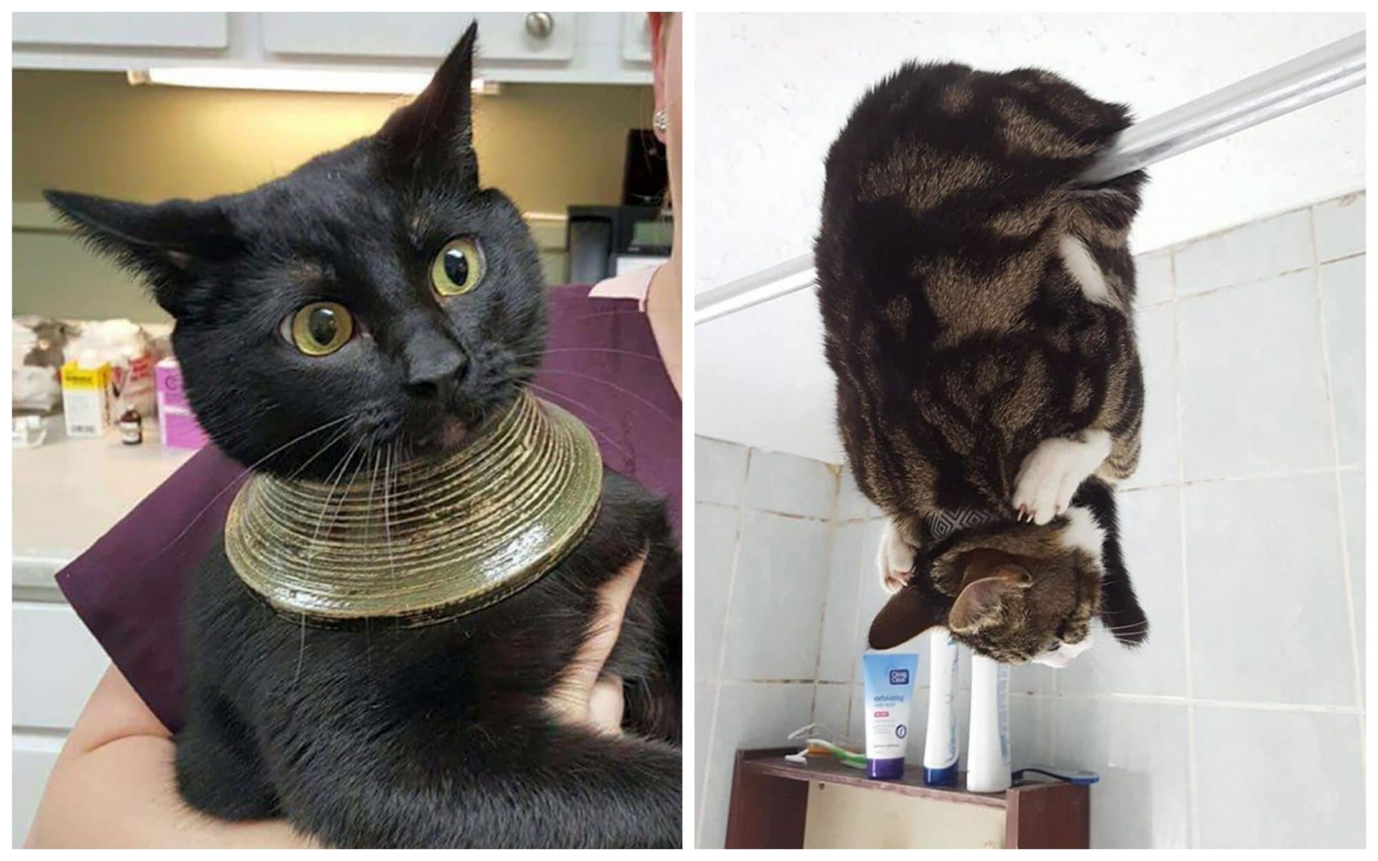 Fatal Error! 19 котов, которые забыли, как ими быть! 20