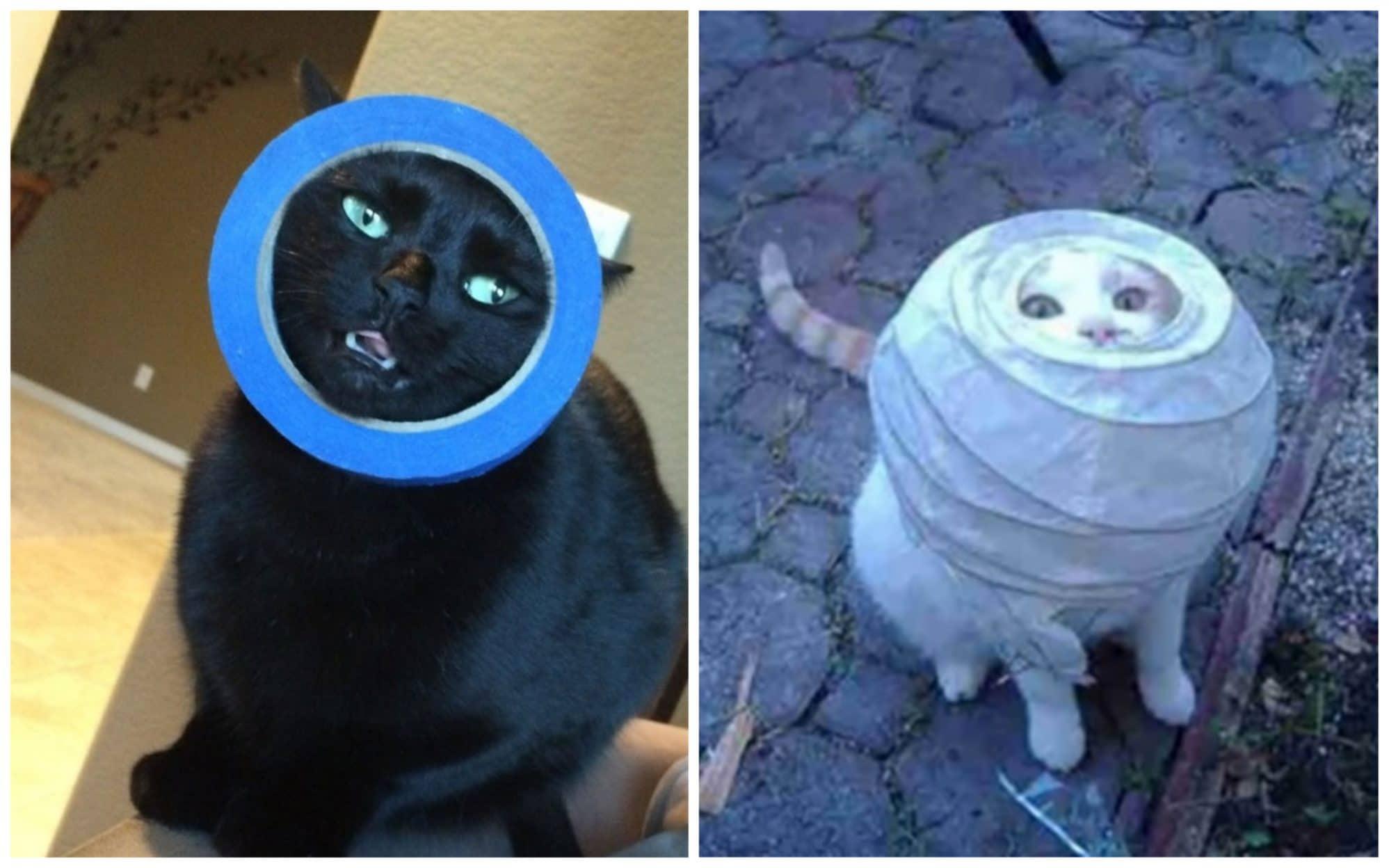 Смешные коты 19