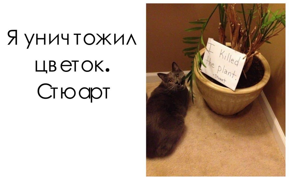 коты 13