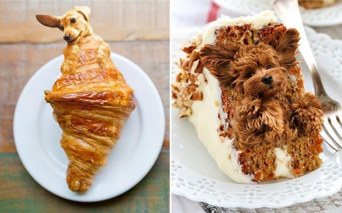 собаки еда