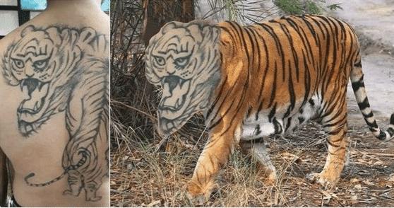 тату в виде тигра