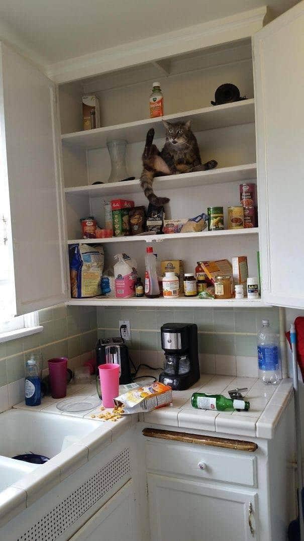 кот в кухне