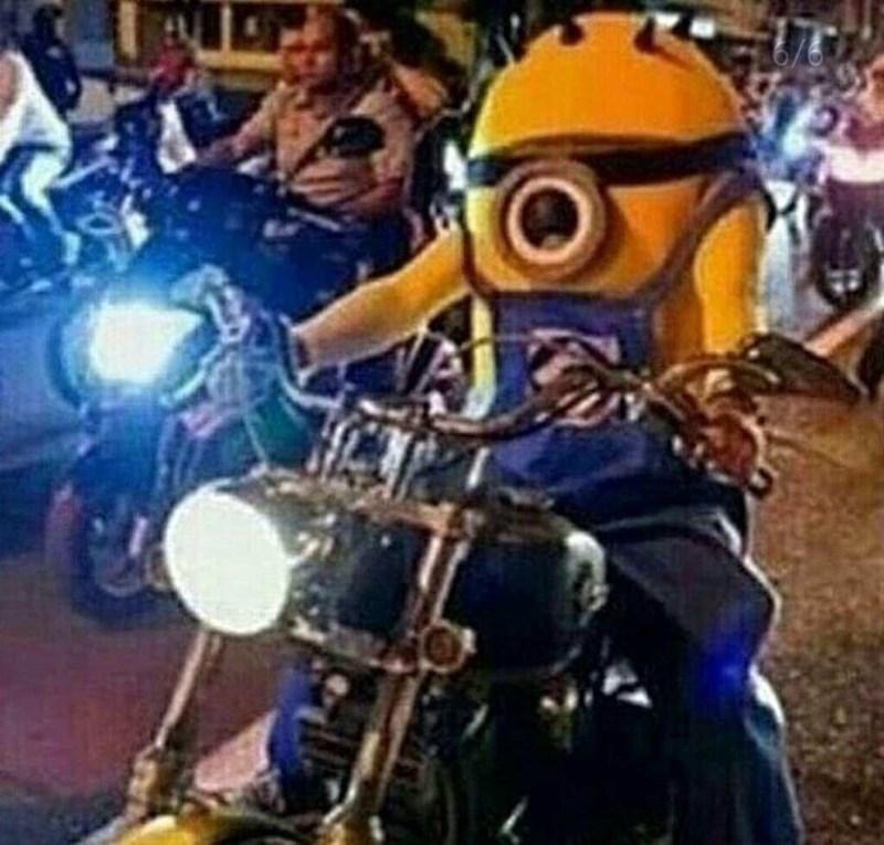 миньон на мотоцикле