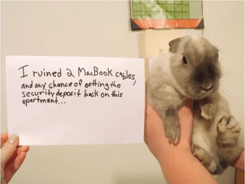 кролик и записка