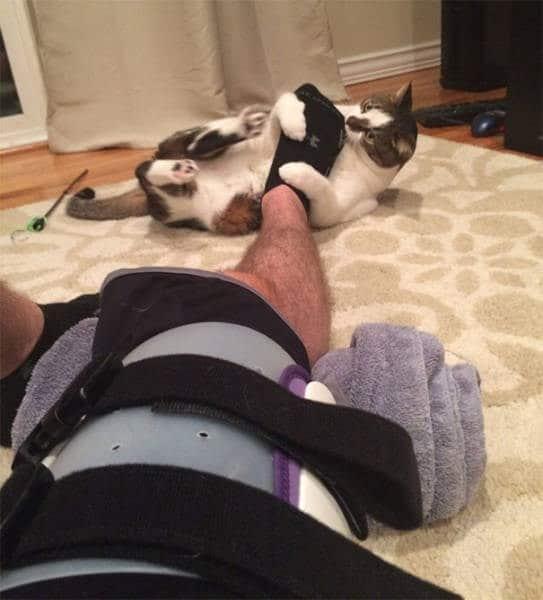 кот кусает за ногу