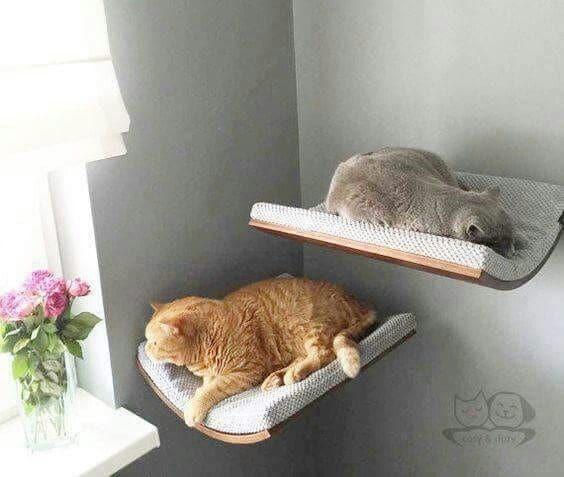 серый и рыжий кот