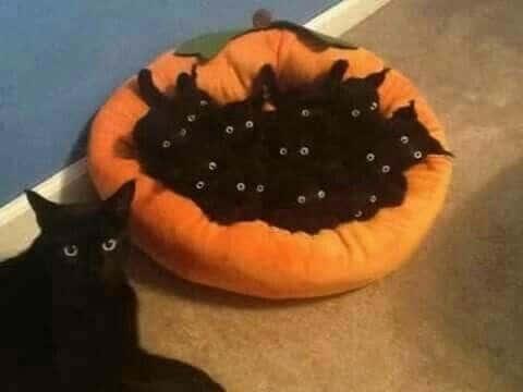 черные котята и кошка