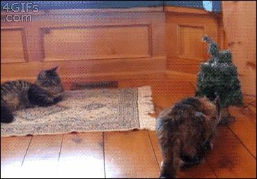 коты и елка gif