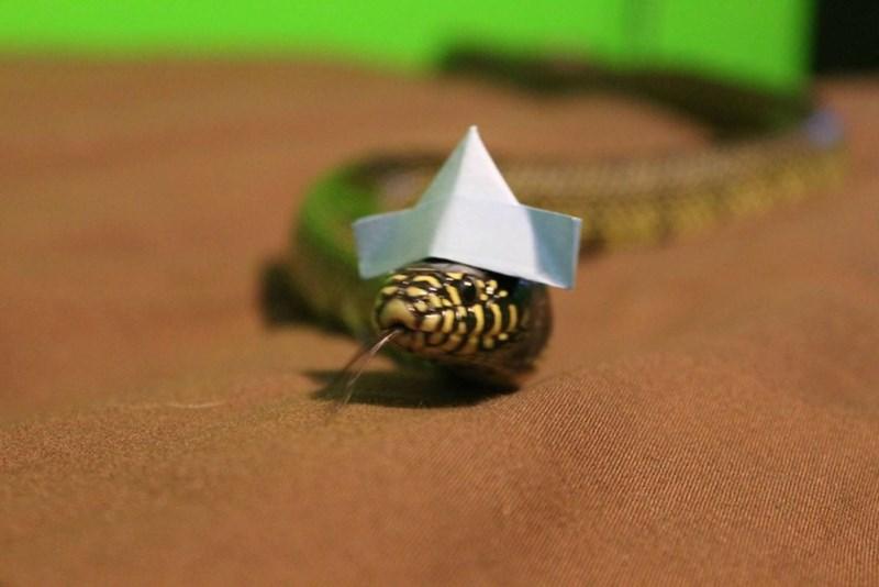 20 милых снимков змей в головных уборах! 12