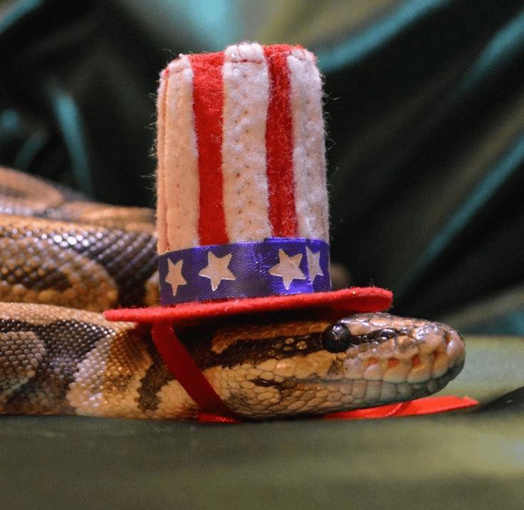 20 милых снимков змей в головных уборах! 6
