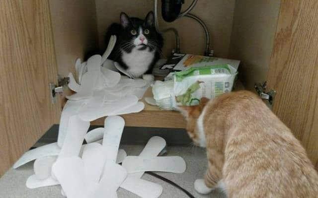коты и прокладки