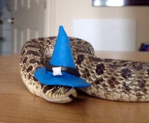 20 милых снимков змей в головных уборах! 5