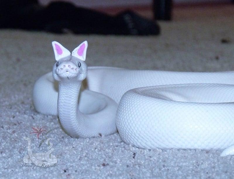 20 милых снимков змей в головных уборах! 3