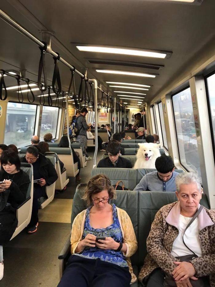 самоед в автобусе