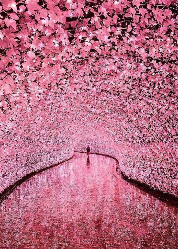 необычный кадр в Японии