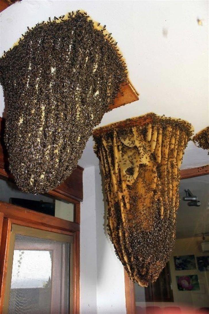 рой диких пчел