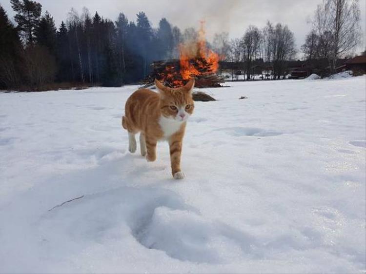 кошки чистое зло9