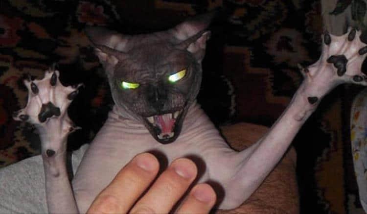 кошки чистое зло10
