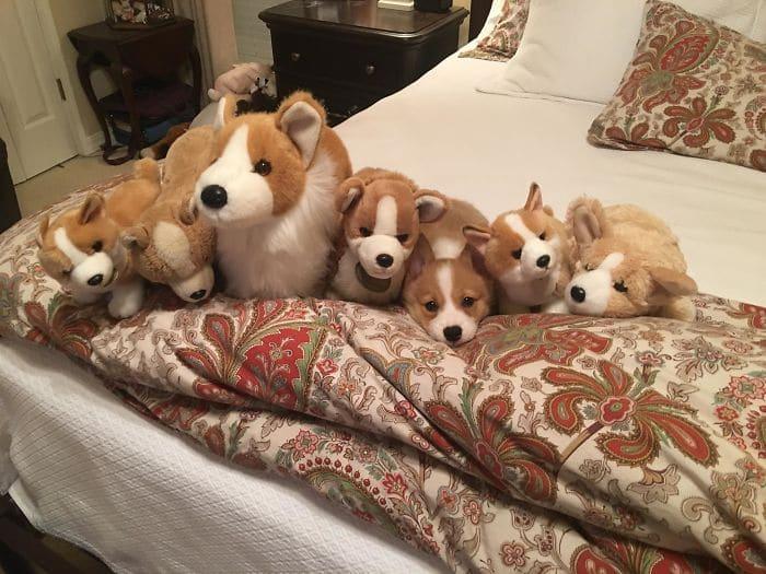 игрушечные собаки