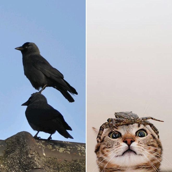 вороны, кот и краб