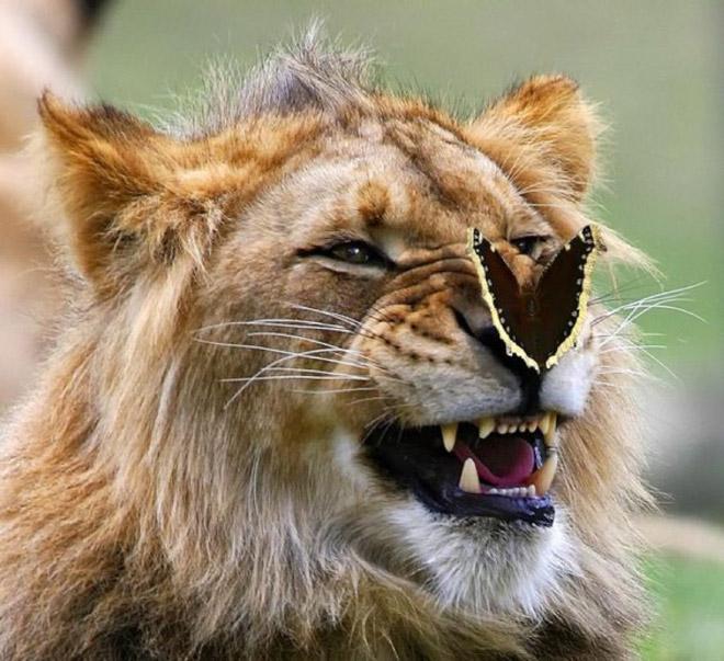лев и бабочка