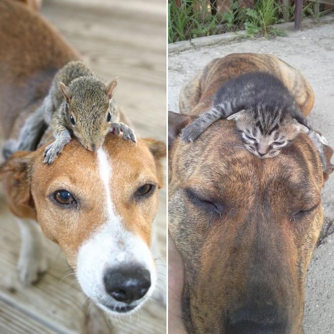 собака, белка и котенок