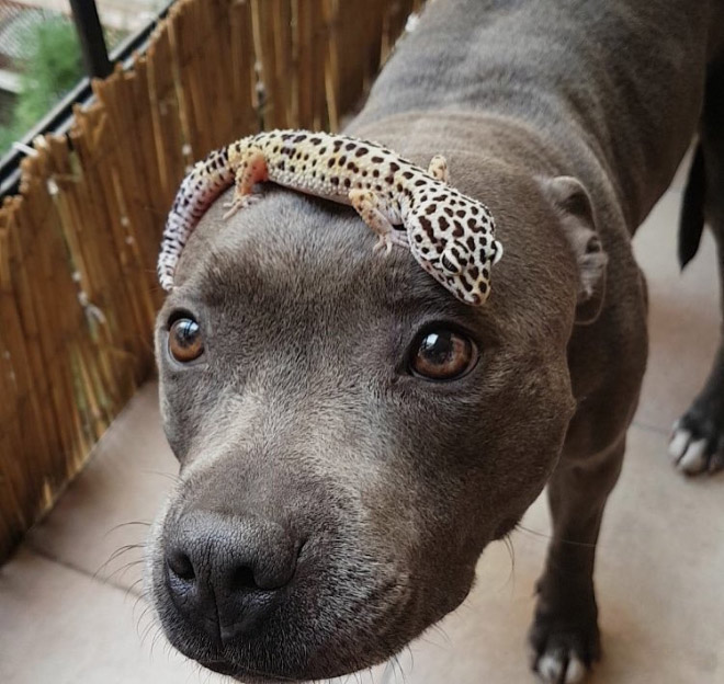 собака и ящерица