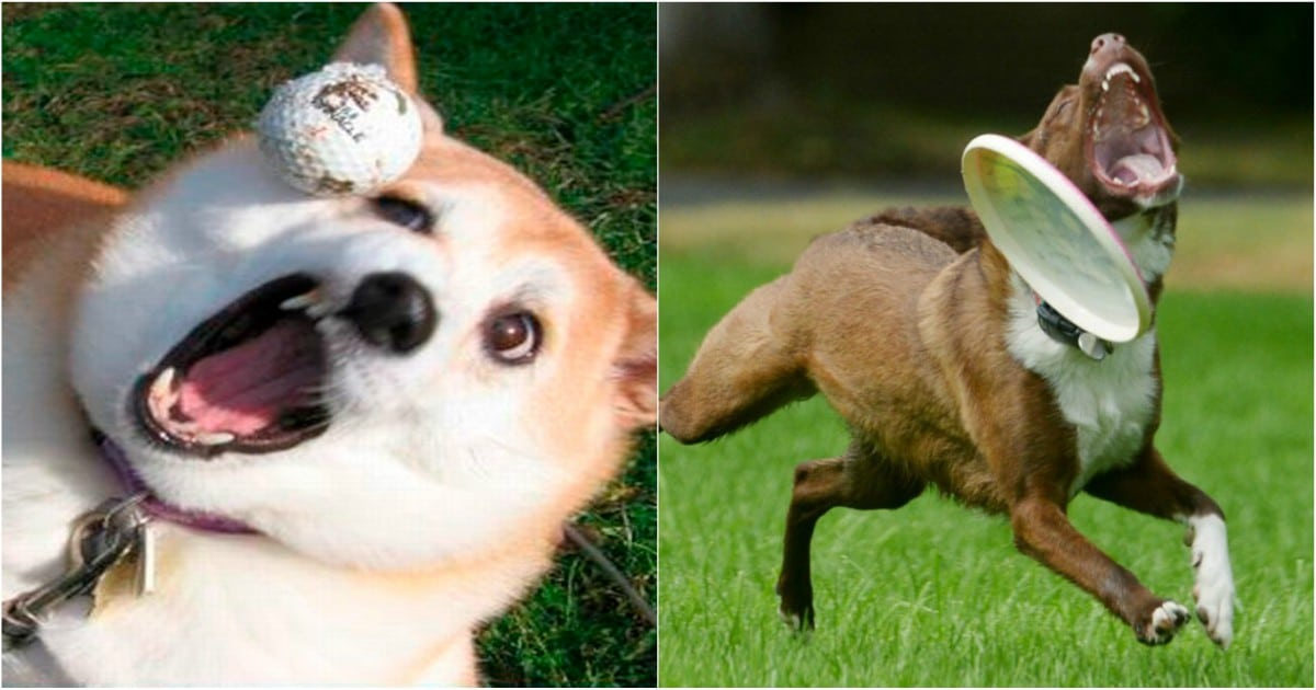 фейлы собак