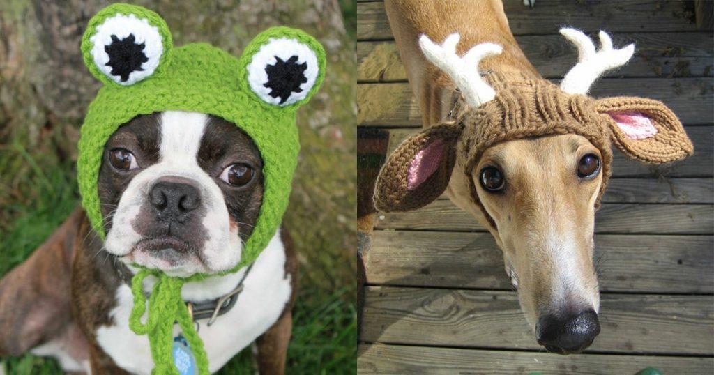 10+ забавных собак в вязаных шапках. И это так мило!