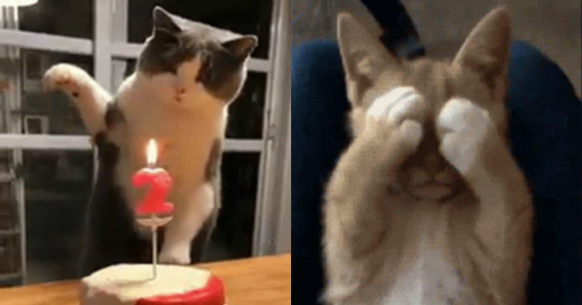 коты gif