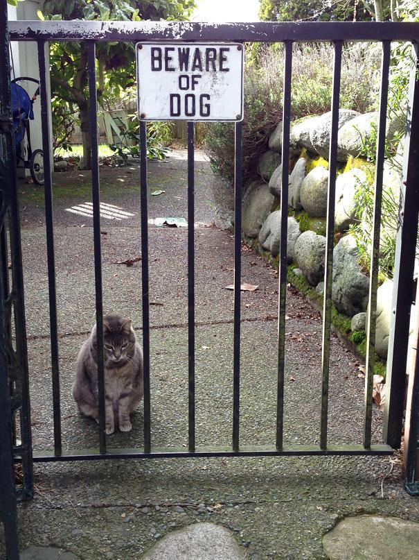 кот за забором