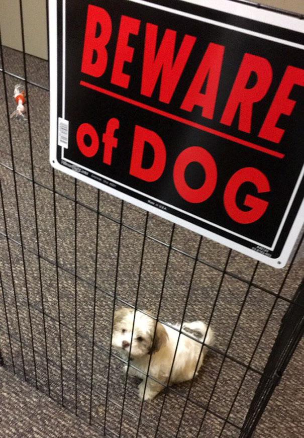 осторожно, во дворе злая собака!