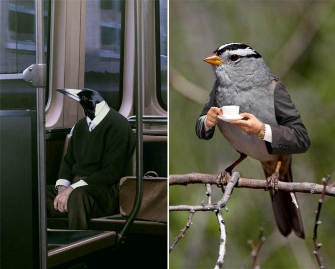 птицы с руками