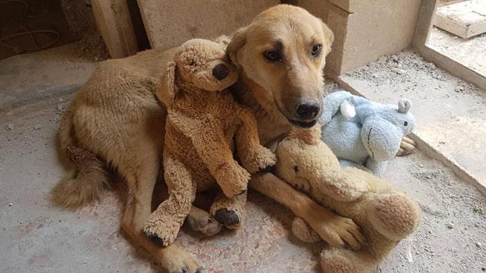 собака и плюшевый медведь