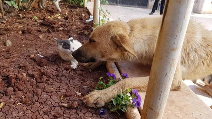 амира и джуниор цветок