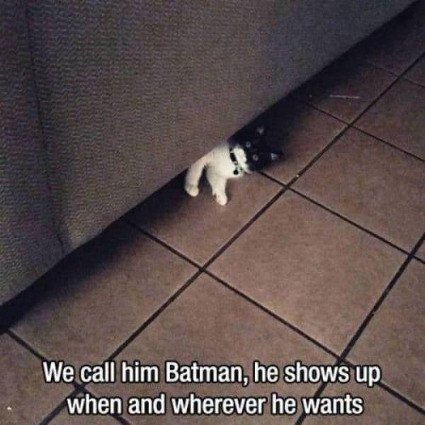 кот под диваном