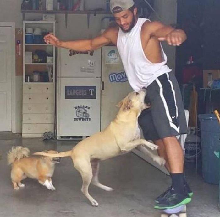 собака кусает мужчину