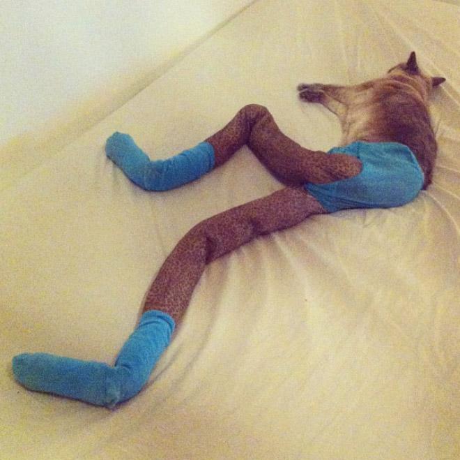 кошка Гуччи